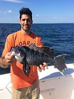 jumbo-black-sea-bass